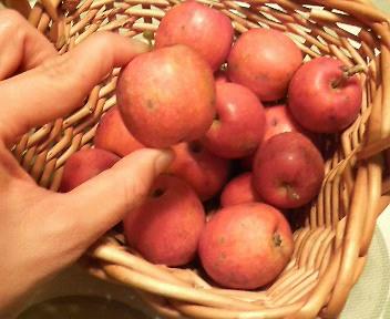 ミニリンゴ.JPG
