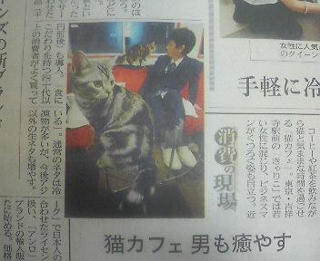 猫カフェ.JPG